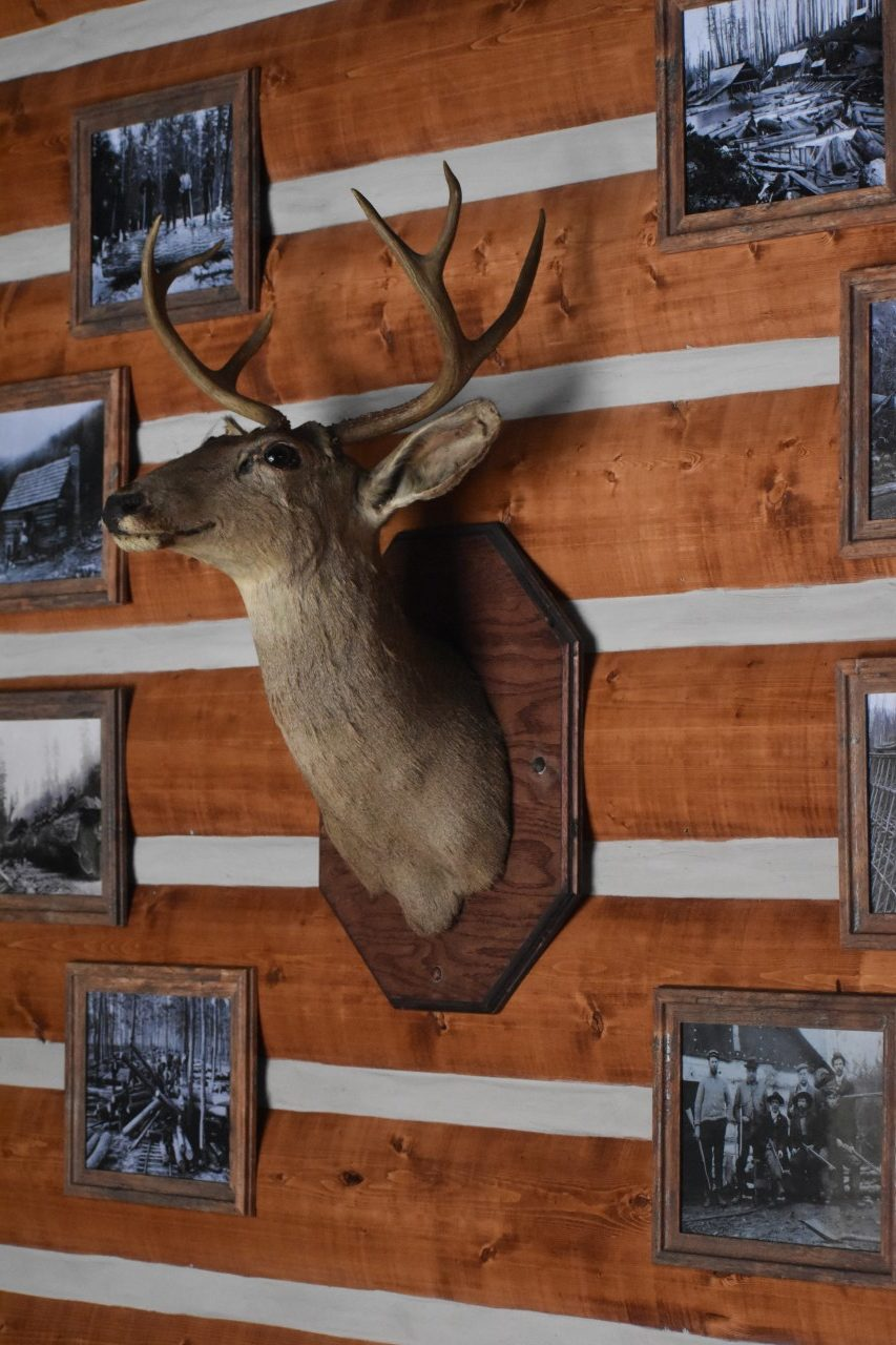 deer bust mounted at Limitless Axes & Ales